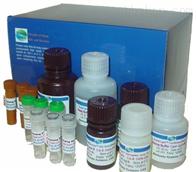 人B细胞生长因子(BCGF)ELISA试剂盒,48T/96T