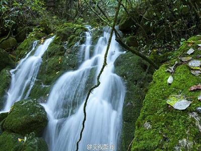 """""""中国神农架""""列入世界自然遗产名录"""