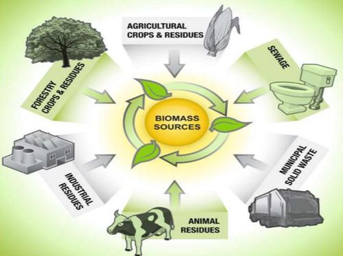 大力发展生物质能源 尽快实现绿色产业精准扶贫